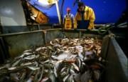 EU-Morocco-Negotiating-New-Fisheries-Deal-300x192