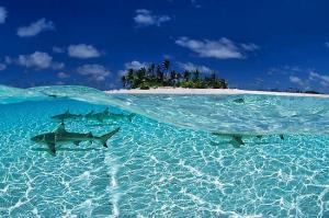 sheraton_sharks_maldives