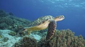 la-oe-branson-cameron-protect-the-oceans-20130-001