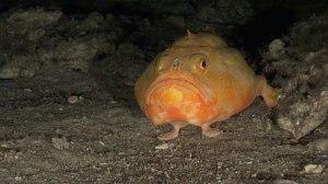 deep_sea_fisheries_01