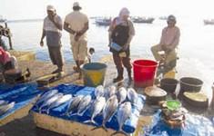 Fishermen_SFB