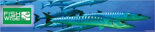 barracuda_banner