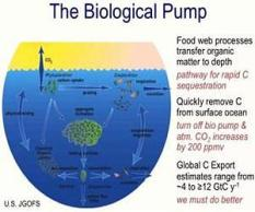 links-ocean-biological-pump-and-pelagic-food-web-lg