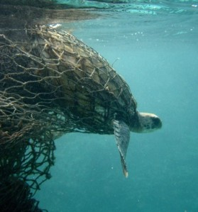 sea-turtle-bycatch-400x430