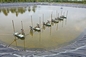 346_shrimp farm