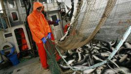 salmon-alaska-fishery-sustainable-sockeye