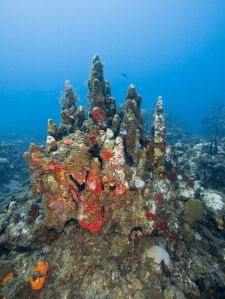 threatened-coral-01_83093_990x742