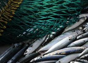 norway-mackerel