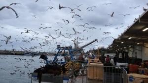 pesca11186e526_400x225