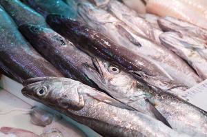 fotolia-70886673-daviles-hake-fish-800