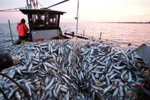 Herring fishing