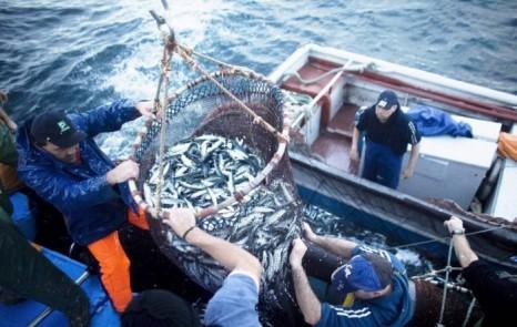 pesca-09-700x444