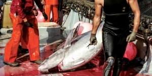 pesca-atum-001-660x330