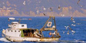 foto-barco-pesca-fishing-948661_1280-610x310