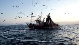 e20161004_jornalalgarve_aquacultura-pesca-3