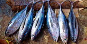 peixes-610x310