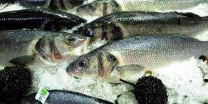 peixe-biologico-01-660x330
