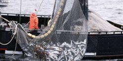 pesca-04-e1471429818573-660x330