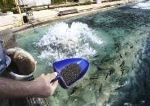 Feedstuff-for-fish
