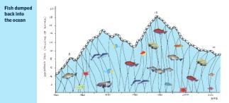 FishGraph_770x3502