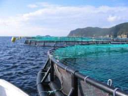 Cooke-Aquaculture-600x450