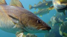 cp_to_end_overfishing_in_eu_ministers_must_follow_the_science_16x9