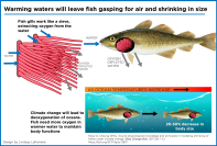 Infographic-Shrinking-Fish.png