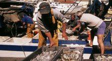 Pesca-guia-pescado-wwf-600x330