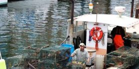 pesca-armadilhas-lagosta-lobster-traps-2759178_960_720-660x330
