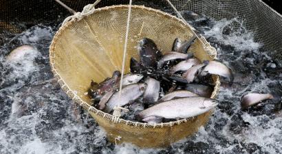 pesca_eletrica