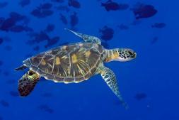 01-protect-high-seas.ngsversion.1514142038891.adapt.676.1