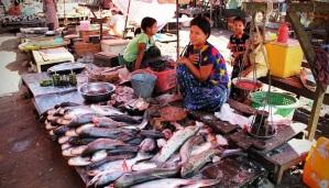 e20171219_fish-market-1559709_1280.jpg
