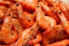 fresh-shrimp-800x600