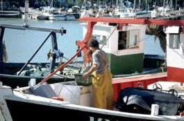 pesca-001-540x357
