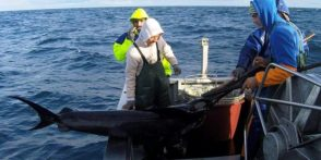 espadarte-pesca-660x330